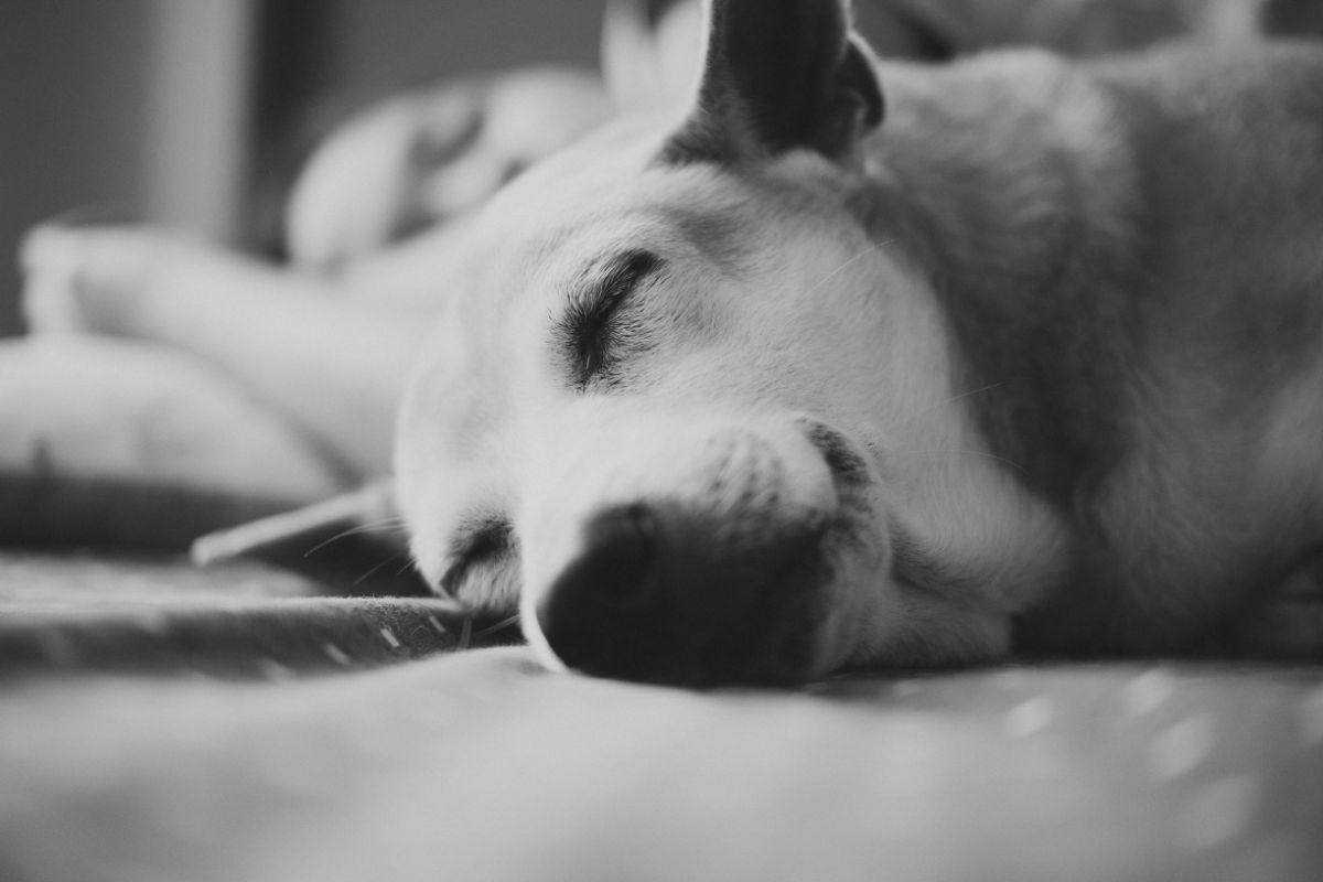 「寝ても寝ても眠い」に関連する英語フレーズ