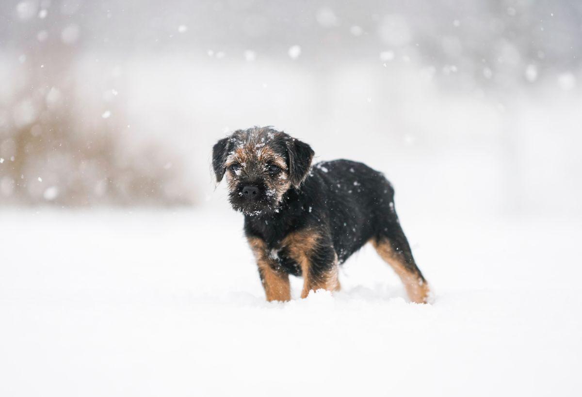 「雪が降りそう」に関する英語フレーズ