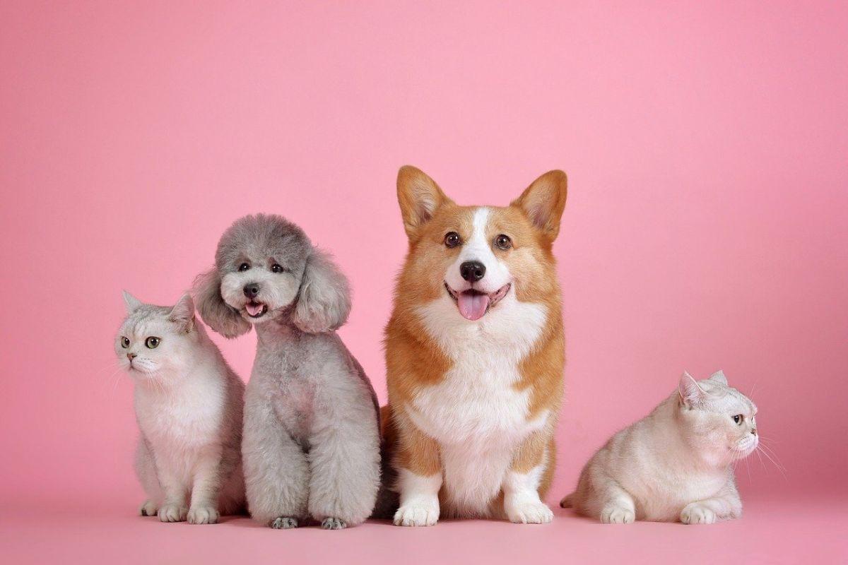 「犬を飼いたい」に関連する英語フレーズ