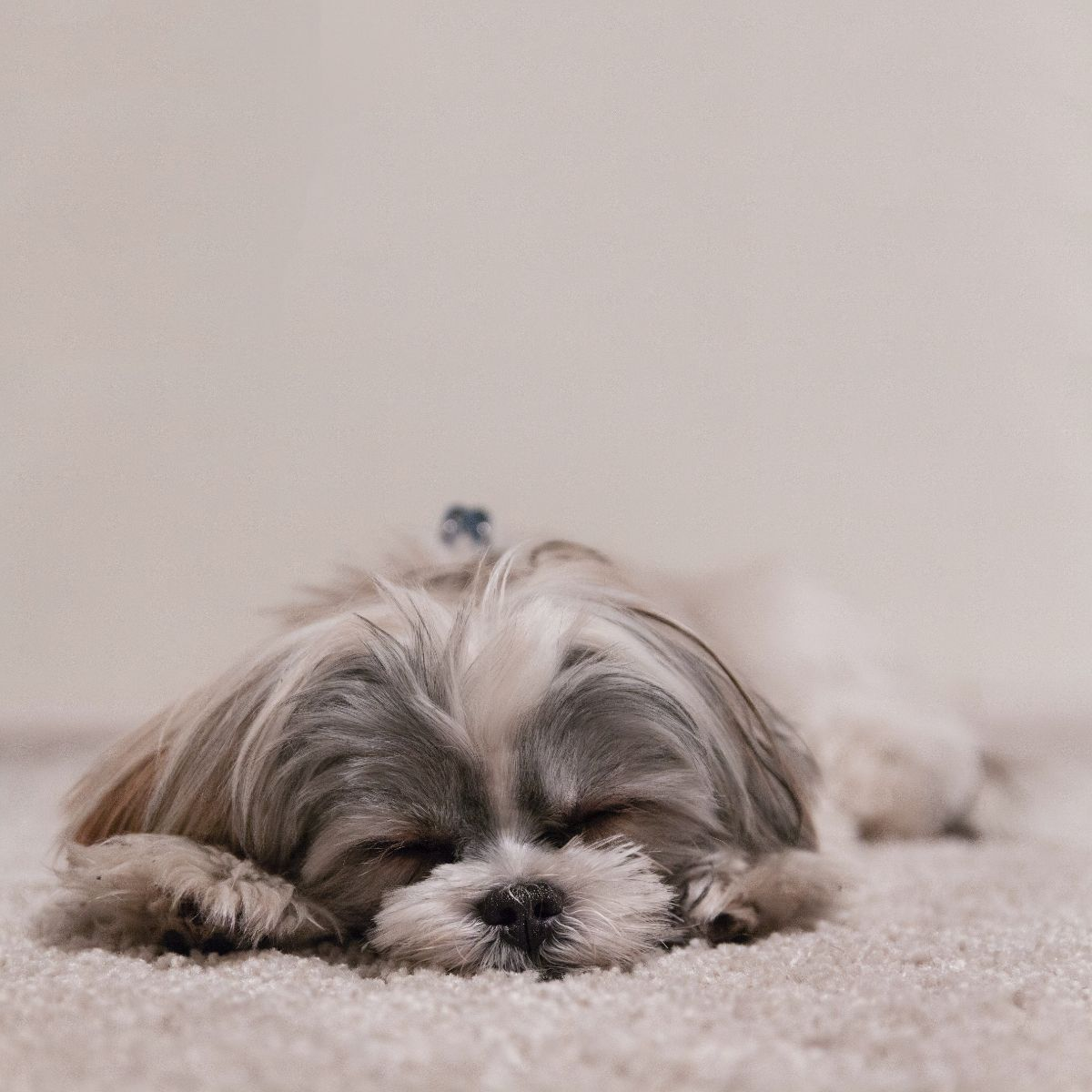 「昼寝が好き」に関連する英語フレーズ