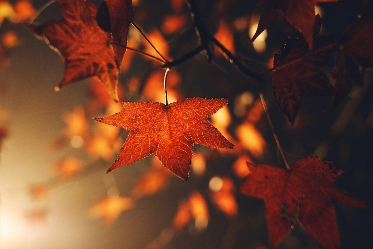 「もうすぐ秋ですね」の意味のその他の英語フレーズ