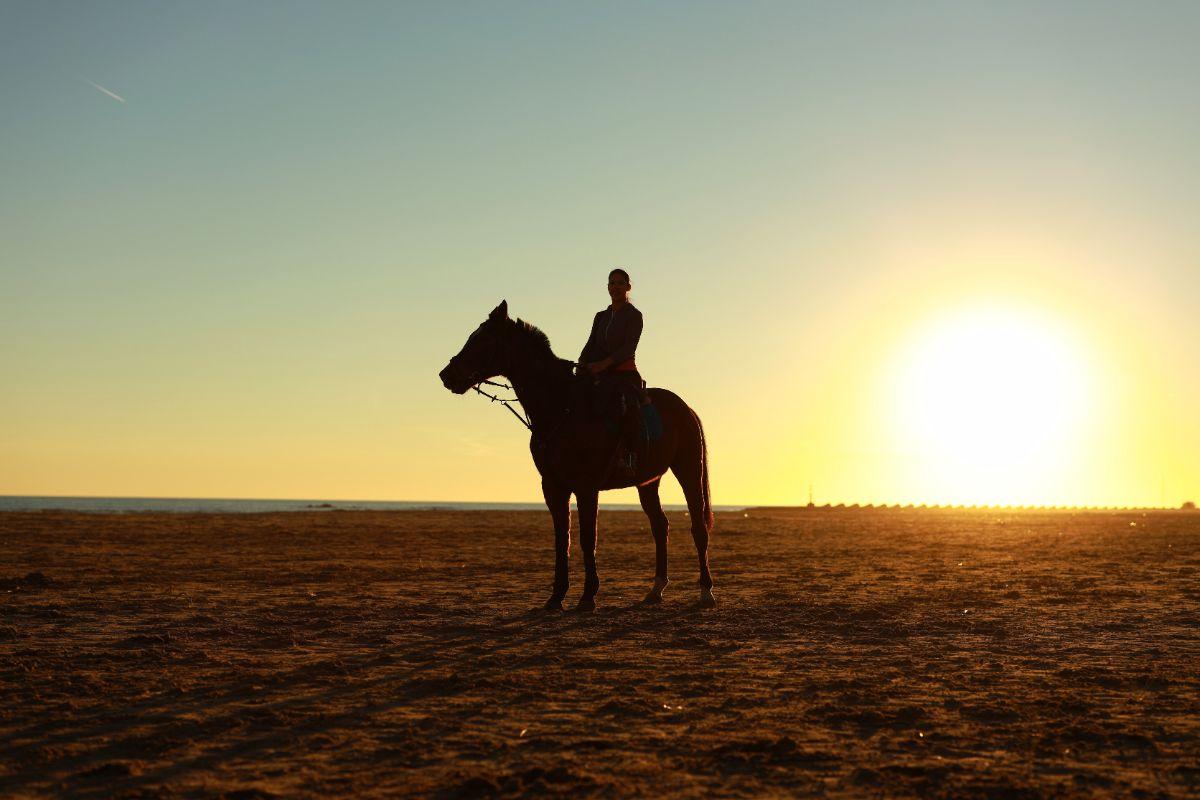 「馬に乗ったことがありますか」に関連する英語フレーズ