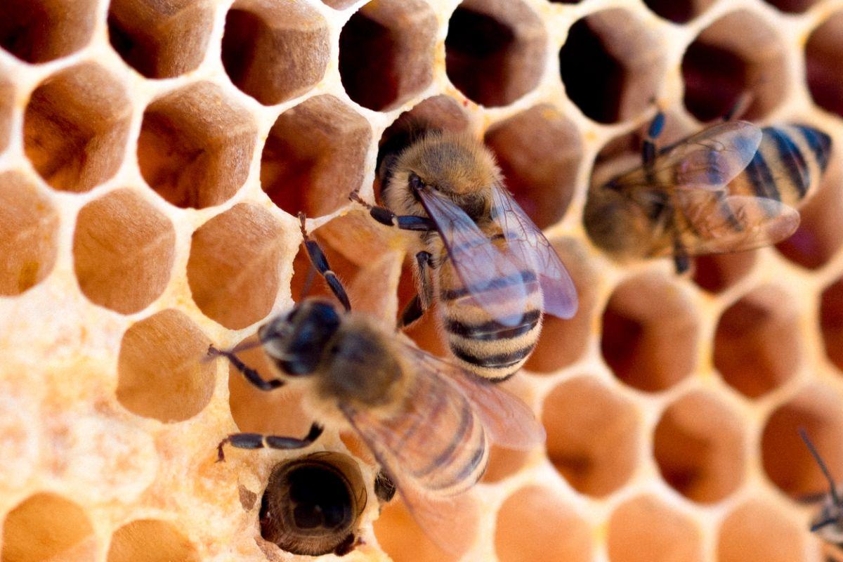 「蜂に刺された」に関連する英語フレーズ