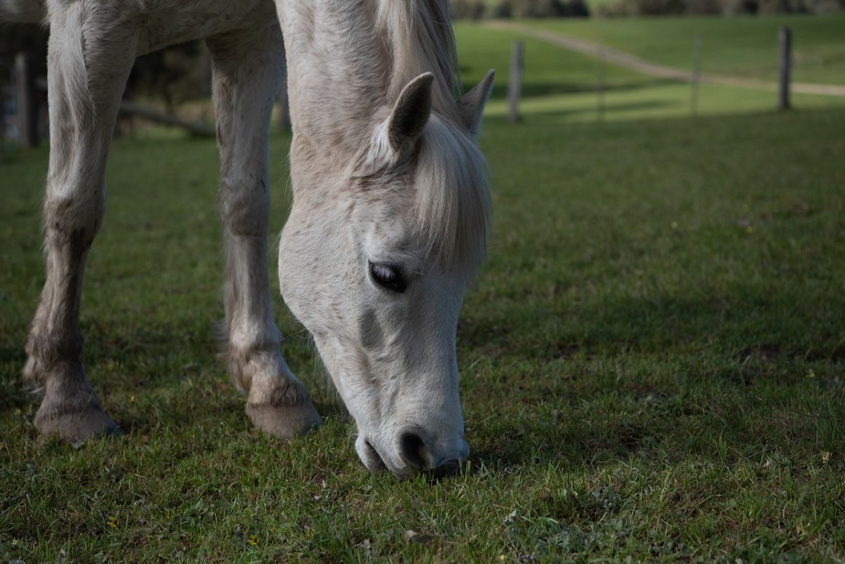 「乗馬が好き」に関連する英語フレーズ