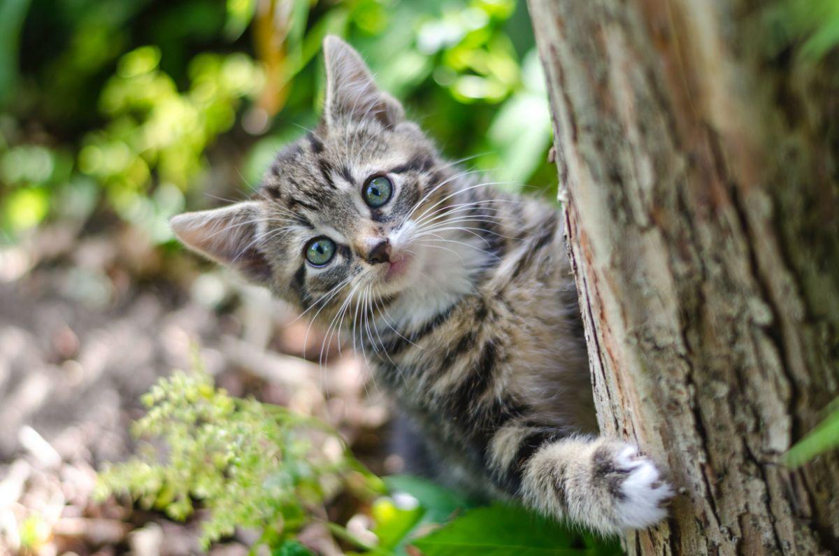 「何匹猫を飼っていますか」に関連する英語フレーズ