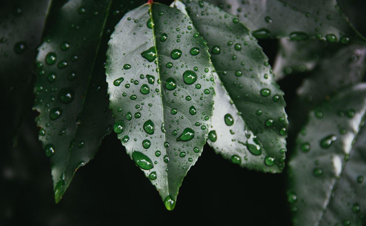 「一日中雨が降ったりやんだりしていた」に関連する英語フレーズ