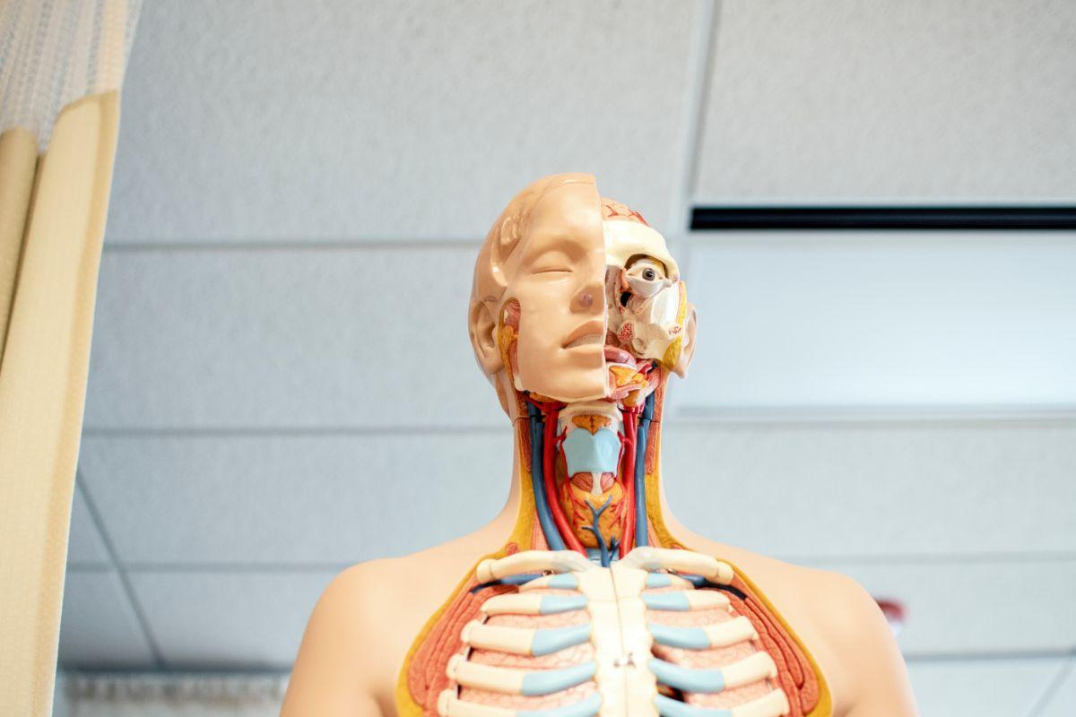 「人工呼吸器をつけている」に関連する英語フレーズ